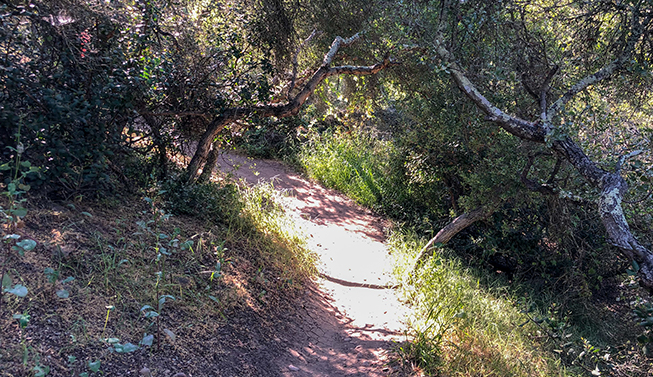 Linda Vista San Diego Walking Trail